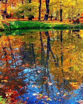 Autumn pond and leaves - Obrázkek zdarma pro iPhone 4S