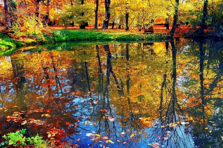 Autumn pond and leaves wallpaper