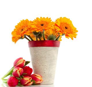 Gerbera Flowers Bouquet - Obrázkek zdarma pro 128x128