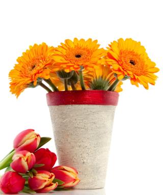 Gerbera Flowers Bouquet - Obrázkek zdarma pro Nokia C5-03