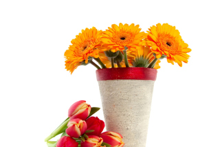 Free Gerbera Flowers Bouquet Picture for Android, iPhone and iPad