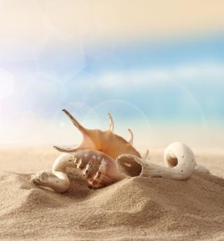 Sea Shells On Sand - Obrázkek zdarma pro 208x208