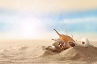Sea Shells On Sand - Obrázkek zdarma pro 720x320