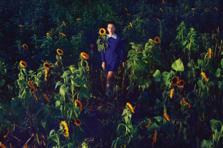 Girl In Blue Dress In Sunflower Field - Obrázkek zdarma pro Fullscreen 1152x864