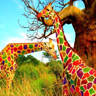 Multicolored Giraffe Family - Obrázkek zdarma pro 208x208