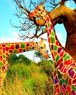 Multicolored Giraffe Family - Obrázkek zdarma pro Nokia 206 Asha