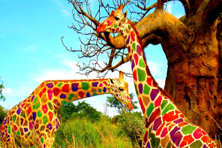 Multicolored Giraffe Family Background for Android, iPhone and iPad