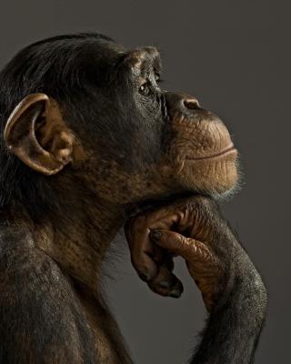 Chimpanzee Modeling - Obrázkek zdarma pro Nokia Asha 503