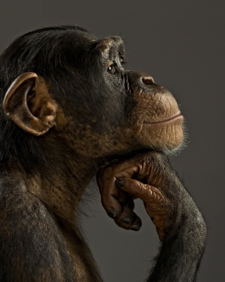 Chimpanzee Modeling - Obrázkek zdarma pro Nokia Lumia 710