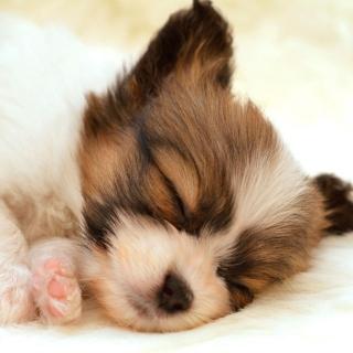 Cute Sleeping Puppy - Obrázkek zdarma pro iPad 3
