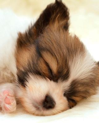 Cute Sleeping Puppy - Obrázkek zdarma pro Nokia Asha 311