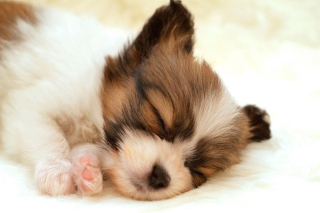 Cute Sleeping Puppy - Obrázkek zdarma pro HTC Wildfire