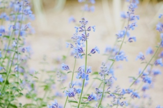 Little Blue Flowers Wallpaper for Android, iPhone and iPad