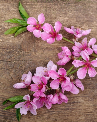 Pink Spring Flowers - Obrázkek zdarma pro Nokia Asha 310
