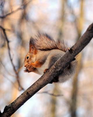 Squirrel with nut - Obrázkek zdarma pro Nokia Asha 306