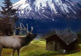 Big Elk - Obrázkek zdarma pro 1600x1200