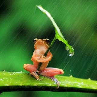 Funny Frog Hiding From Rain - Obrázkek zdarma pro iPad mini 2