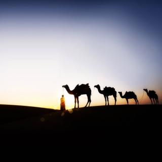 Camel At Sunset - Obrázkek zdarma pro 128x128