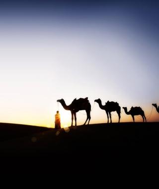 Camel At Sunset - Obrázkek zdarma pro Nokia Asha 305