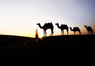 Camel At Sunset - Obrázkek zdarma pro Fullscreen Desktop 1400x1050