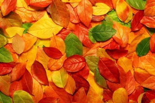 Autumn Leaves Rug Background for Android, iPhone and iPad
