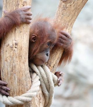 Cute Little Monkey In Zoo - Obrázkek zdarma pro iPhone 5S