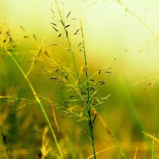 Macro Green Plants - Obrázkek zdarma pro iPad 3