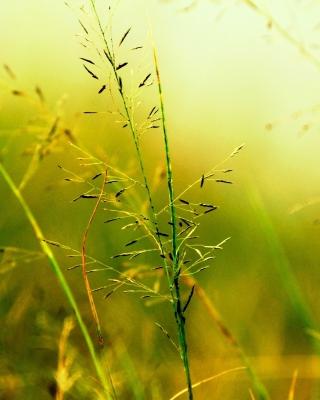 Macro Green Plants - Obrázkek zdarma pro iPhone 3G