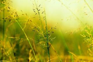 Macro Green Plants - Obrázkek zdarma pro 1080x960