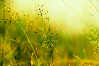 Macro Green Plants - Obrázkek zdarma pro Samsung Galaxy S3