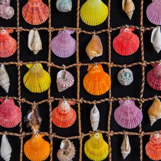 Seashells - Obrázkek zdarma pro 208x208