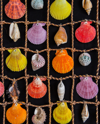 Seashells - Obrázkek zdarma pro Nokia Asha 310