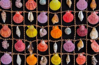 Seashells - Obrázkek zdarma pro Samsung Galaxy Q