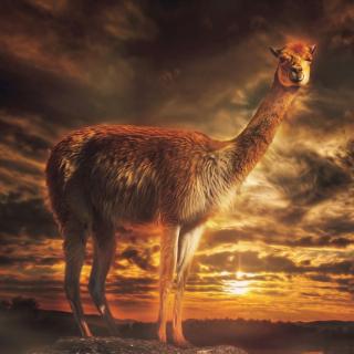 Llama - Obrázkek zdarma pro iPad Air