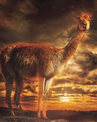Llama - Obrázkek zdarma pro Nokia Asha 203