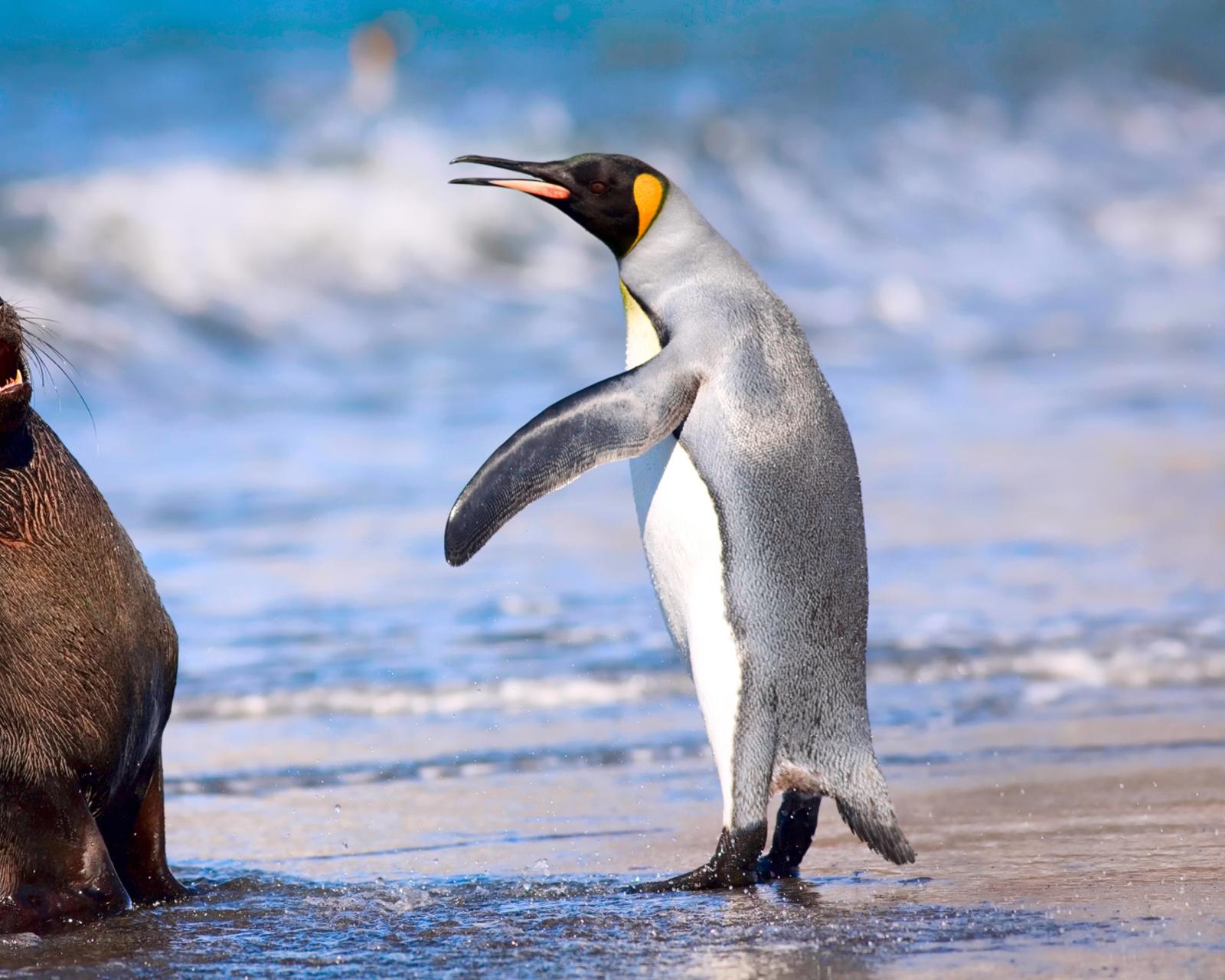 эротические картинки с пингвинами-юо1