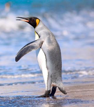 Royal Penguin - Obrázkek zdarma pro Nokia X1-01