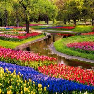 Tulips and Muscari Spring Park - Obrázkek zdarma pro 1024x1024