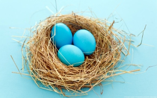 Free Blue Eggs Picture for Android, iPhone and iPad