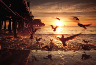 Free Seagulls In California Beach Picture for Android, iPhone and iPad