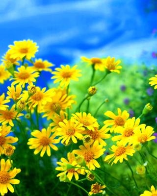 Yellow Daisies - Obrázkek zdarma pro Nokia C-Series