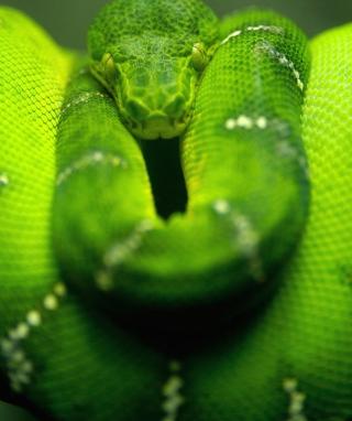 Tree Snake On Branch - Obrázkek zdarma pro Nokia C3-01