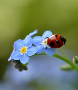 Ladybug On Blue Flowers - Obrázkek zdarma pro Nokia Asha 310