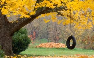 Tire Swing - Obrázkek zdarma pro 1366x768