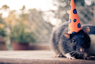 Party Mouse Wallpaper for Android, iPhone and iPad