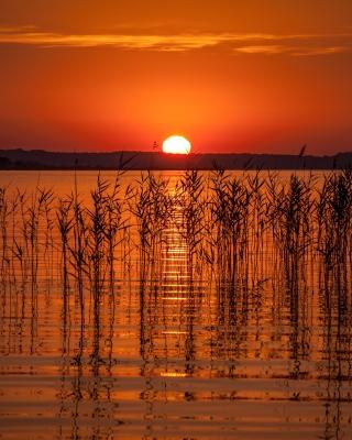 Summer Red Sunset - Obrázkek zdarma pro Nokia Asha 502