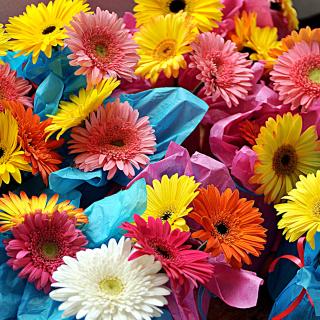 Bouquet of Gerberas - Obrázkek zdarma pro 208x208