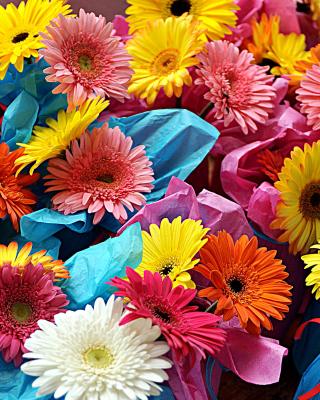 Bouquet of Gerberas - Obrázkek zdarma pro iPhone 6 Plus