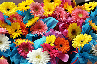 Free Bouquet of Gerberas Picture for Android, iPhone and iPad