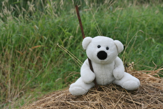 White Teddy Bear Wallpaper for Android, iPhone and iPad